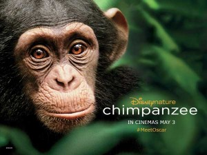Chimpanzee-Quad
